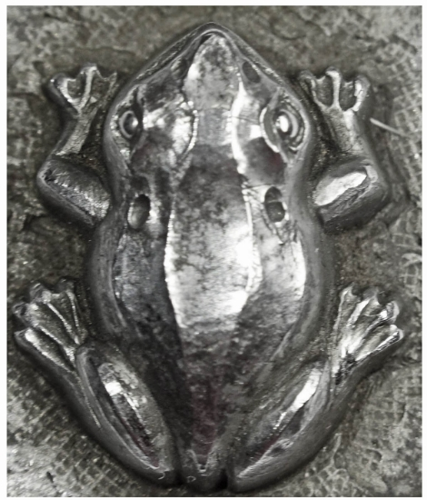 Picture of Impression Die Frog of the Swamp